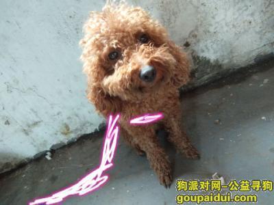 阳江寻狗启示,寻狗主人 希望主人看到后主动联系我,它是一只非常可爱的宠物狗狗,希望它早日回家,不要变成流浪狗。