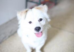 寻狗启示,捡到时身上有蓝色项圈,之前可能有狗牌。,它是一只非常可爱的宠物狗狗,希望它早日回家,不要变成流浪狗。