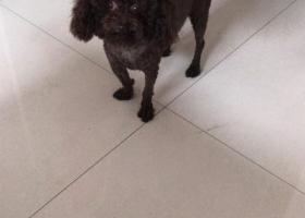 寻狗启示,阳泉市酬金2000寻狗,它是一只非常可爱的宠物狗狗,希望它早日回家,不要变成流浪狗。