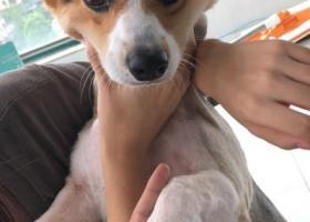寻狗启示,心急如焚 杭州滨江的大家能帮忙看看么,它是一只非常可爱的宠物狗狗,希望它早日回家,不要变成流浪狗。