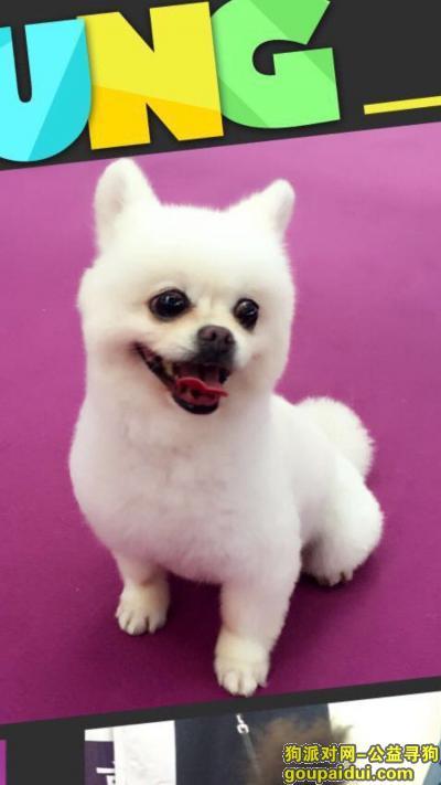抚州寻狗启示,重金寻狗,博美,温莎高速,南城服务区丢失,它是一只非常可爱的宠物狗狗,希望它早日回家,不要变成流浪狗。