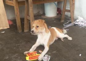 寻狗启示,广州海珠区地铁东晓南附近丢狗,希望有人找到,它是一只非常可爱的宠物狗狗,希望它早日回家,不要变成流浪狗。