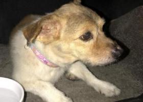 寻狗启示,2018年9月3日早上捡到,它是一只非常可爱的宠物狗狗,希望它早日回家,不要变成流浪狗。