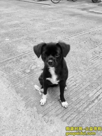 【宁波找狗】,鄞州区龙升制衣厂旁走丢,它是一只非常可爱的宠物狗狗,希望它早日回家,不要变成流浪狗。