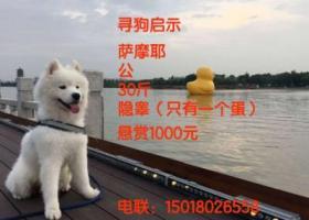 寻狗启示,东莞麻涌 #寻狗# 萨摩耶,它是一只非常可爱的宠物狗狗,希望它早日回家,不要变成流浪狗。
