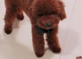 寻狗启示,寻狗启示!希望爱心人士捡到送回!,它是一只非常可爱的宠物狗狗,希望它早日回家,不要变成流浪狗。