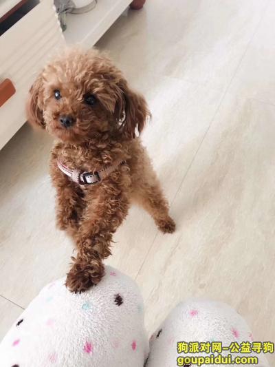 抚顺寻狗启示,寻找棕色泰迪.东洲区阿金沟走失,它是一只非常可爱的宠物狗狗,希望它早日回家,不要变成流浪狗。