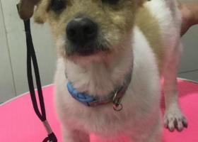 寻狗启示,20180903朝阳公园桥下捡到,它是一只非常可爱的宠物狗狗,希望它早日回家,不要变成流浪狗。