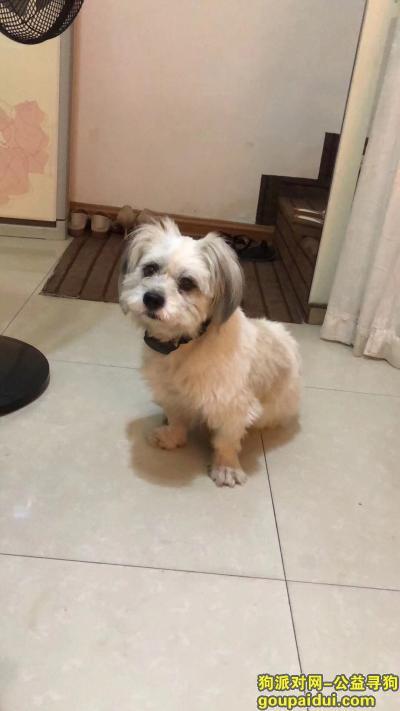 赣州找狗,南康家具城走失,脖子上带有黑色项圈,它是一只非常可爱的宠物狗狗,希望它早日回家,不要变成流浪狗。