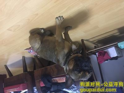 丽水寻狗启示,丽水莲都永辉附近遗失一只棕色法斗,它是一只非常可爱的宠物狗狗,希望它早日回家,不要变成流浪狗。