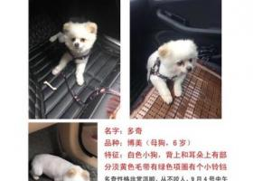 寻狗启示,成都龙泉驿区同安镇中粮御岭湾酬谢两千元寻找博美,它是一只非常可爱的宠物狗狗,希望它早日回家,不要变成流浪狗。
