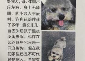 上海闵行区翠钰南路名都城酬谢一万元寻找灰色贵宾