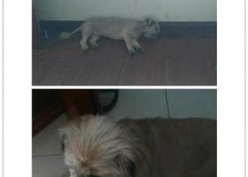 寻狗启示,渝中区七星岗业城花园9月9日走失,它是一只非常可爱的宠物狗狗,希望它早日回家,不要变成流浪狗。