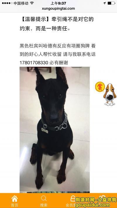 瑞安寻狗网,两万元寻找爱犬哈德 黑色杜宾  买到的请与我联系,它是一只非常可爱的宠物狗狗,希望它早日回家,不要变成流浪狗。