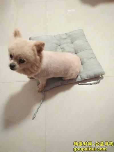盐城找狗主人,捡到一只博美,应该挺老的了,它是一只非常可爱的宠物狗狗,希望它早日回家,不要变成流浪狗。