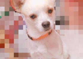 寻狗启示,帮小狗找主人 哈尔滨市香坊区 18年9月11日,它是一只非常可爱的宠物狗狗,希望它早日回家,不要变成流浪狗。