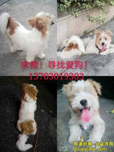 顺德寻狗网,佛山顺德区陈村镇锦龙路腋园酬谢八千元寻找小番狗,它是一只非常可爱的宠物狗狗,希望它早日回家,不要变成流浪狗。