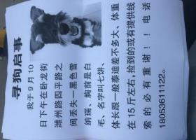 寻狗启示,潍坊四平路卧龙街丢失黑色雪纳瑞,它是一只非常可爱的宠物狗狗,希望它早日回家,不要变成流浪狗。