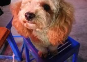 寻狗启示,2018年9月13日,它是一只非常可爱的宠物狗狗,希望它早日回家,不要变成流浪狗。