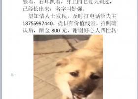 寻狗启示,寻找浅黄色土狗,在和平路附近丢失,它是一只非常可爱的宠物狗狗,希望它早日回家,不要变成流浪狗。