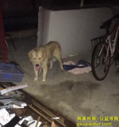 佛山寻狗主人,210年9月17日晚上22点左右在三山大坊村工业区集嘉广场附近捡到一只金毛犬,它是一只非常可爱的宠物狗狗,希望它早日回家,不要变成流浪狗。