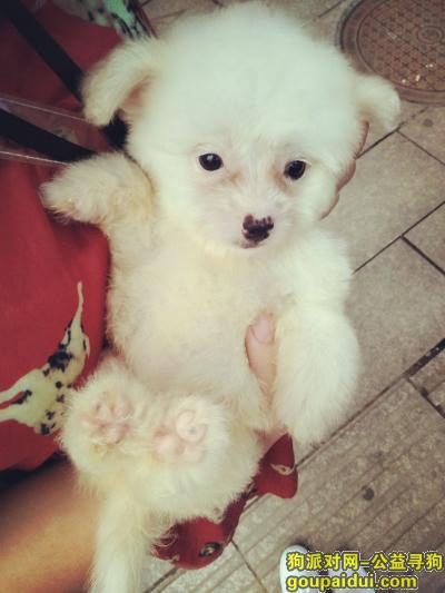 上饶寻狗启示,它对我真的很重要,我最难熬的那段日子是它陪我熬过来的,我跟你买,价格你提,拜托了。,它是一只非常可爱的宠物狗狗,希望它早日回家,不要变成流浪狗。