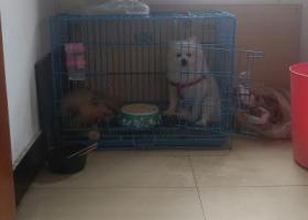 寻狗启示,寻找爱犬,盐都区车苑华庭走丢,它是一只非常可爱的宠物狗狗,希望它早日回家,不要变成流浪狗。