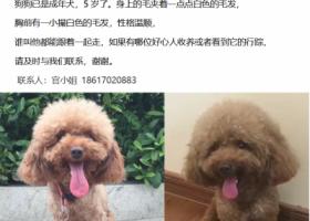 寻狗启示,养了五年的泰迪,请好心人帮忙找找  感谢~,它是一只非常可爱的宠物狗狗,希望它早日回家,不要变成流浪狗。