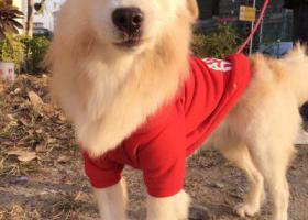 寻狗启示,此生唯一的一条狗 请大家帮忙留意  非常感谢,它是一只非常可爱的宠物狗狗,希望它早日回家,不要变成流浪狗。