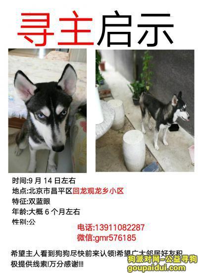 【北京捡到狗】,北京昌平回龙观龙乡小区捡到哈士奇,公狗,希望主人前来认领!!!,它是一只非常可爱的宠物狗狗,希望它早日回家,不要变成流浪狗。