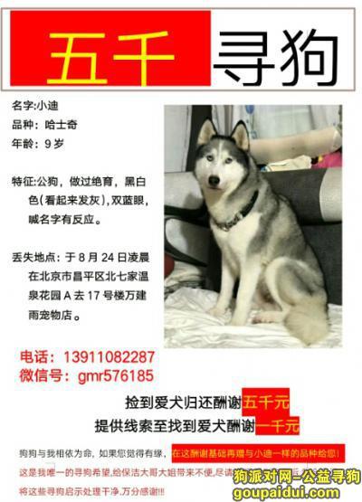 寻狗启示,北京5000元寻找哈士奇!希望好心人多多转发,扩散!,它是一只非常可爱的宠物狗狗,希望它早日回家,不要变成流浪狗。