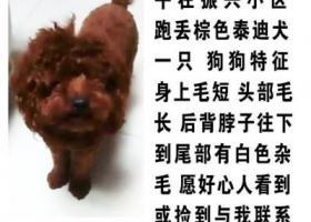 寻狗启示,18年9月18日走失于松山区振兴小区附近,它是一只非常可爱的宠物狗狗,希望它早日回家,不要变成流浪狗。