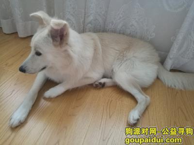 舟山寻狗网,甜甜等你回家,东港壹品尊园附近丢失,它是一只非常可爱的宠物狗狗,希望它早日回家,不要变成流浪狗。