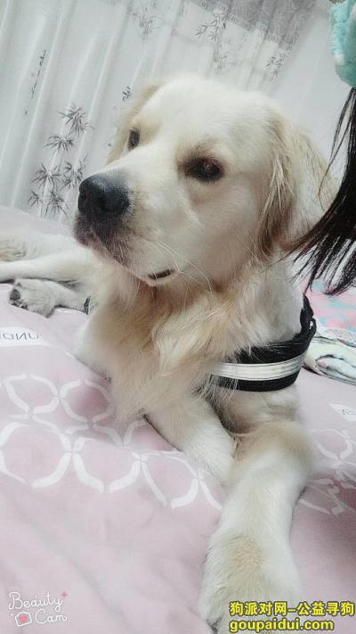 ,大白快回家,可想你了,它是一只非常可爱的宠物狗狗,希望它早日回家,不要变成流浪狗。