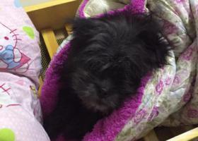 寻狗启示,广州车陂南寻狗,它是一只非常可爱的宠物狗狗,希望它早日回家,不要变成流浪狗。