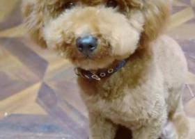 寻狗启示,西宁城中区寻找爱犬,急急急,它是一只非常可爱的宠物狗狗,希望它早日回家,不要变成流浪狗。