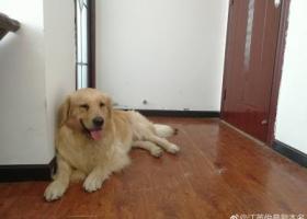 寻狗启示,襄阳寻狗,请大家多多帮忙,它是一只非常可爱的宠物狗狗,希望它早日回家,不要变成流浪狗。