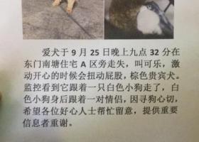 寻狗启示,深圳罗湖东门老街寻狗,它是一只非常可爱的宠物狗狗,希望它早日回家,不要变成流浪狗。