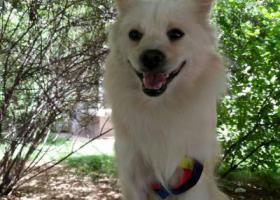 寻狗启示,2018年6月在碑林区测绘西路捡到这只狗,它是一只非常可爱的宠物狗狗,希望它早日回家,不要变成流浪狗。