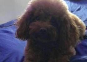 寻狗启示,让狗狗艾米早日回家愿好心人尽快联系,它是一只非常可爱的宠物狗狗,希望它早日回家,不要变成流浪狗。