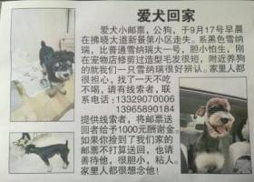 寻狗启示,小狗邮票走丢,请大家帮忙留意一下,谢谢了拜托,它是一只非常可爱的宠物狗狗,希望它早日回家,不要变成流浪狗。