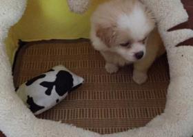 寻狗启示,9月30号,联丰中路,它是一只非常可爱的宠物狗狗,希望它早日回家,不要变成流浪狗。