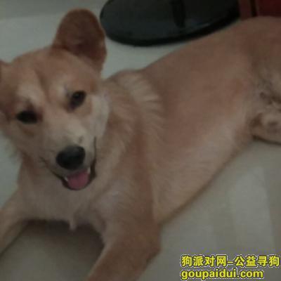 ,9月30号早上丢失的黄色土狗,它是一只非常可爱的宠物狗狗,希望它早日回家,不要变成流浪狗。