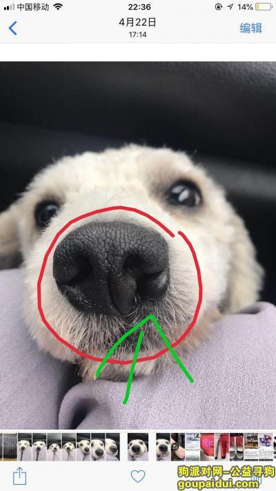 ,1千元寻狗白色比熊鼻子有缺陷,它是一只非常可爱的宠物狗狗,希望它早日回家,不要变成流浪狗。