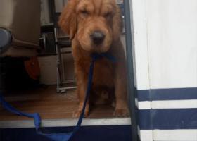 东风东路南太桥捡到一条狗