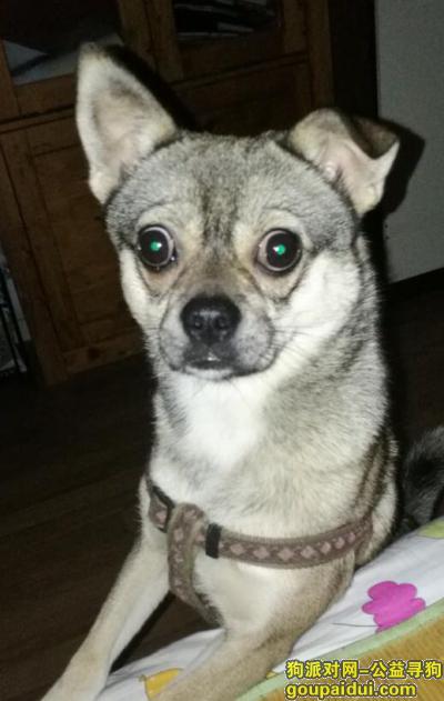 ,求助:寻找自家高速路上走失的狗狗,它是一只非常可爱的宠物狗狗,希望它早日回家,不要变成流浪狗。