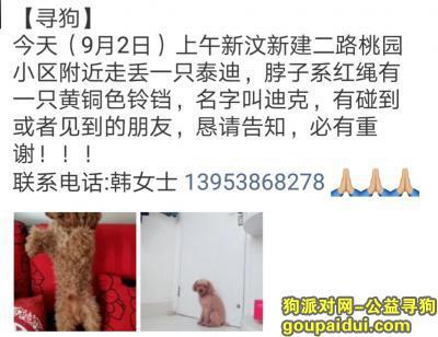 泰安寻狗,新汶新建三路丢失狗狗,它是一只非常可爱的宠物狗狗,希望它早日回家,不要变成流浪狗。