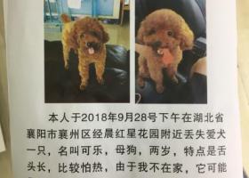 寻狗启示,寻一只舌头长长的很怕热的泰迪宝宝,母狗,捡到予以归还,给两千元的酬谢,它是一只非常可爱的宠物狗狗,希望它早日回家,不要变成流浪狗。