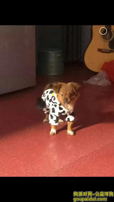 宜昌找狗,宜昌寻找爱犬!重金酬谢!!!,它是一只非常可爱的宠物狗狗,希望它早日回家,不要变成流浪狗。