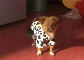 寻狗启示,宜昌寻找爱犬!重金酬谢!!!,它是一只非常可爱的宠物狗狗,希望它早日回家,不要变成流浪狗。